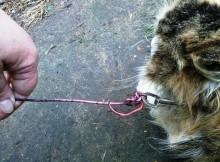 Przywiązali kotkę drutem