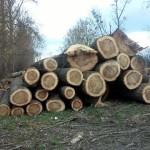 Wycięto drzewa wzdłuż ul.Jana Pawła II iwału