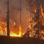 Wronczanin podpalaczem lasów. Ujęty nagorącym uczynku przyznał się dowiny