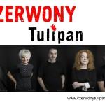 Czerwony Tulipan naDzień Kobiet weWronkach