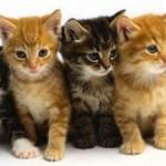 Ratujmy bezdomne koty