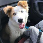 Poszukujemy zaginionego psa!