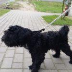 Pies szuka swojego właściciela :)