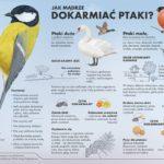 Jak mądrze dokarmiać ptaki?