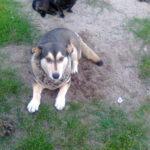 W Chojnie zaginęły dwa psy
