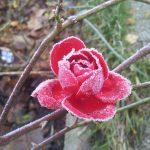 """Takie widoki weWronkach """"zimą"""" :)"""
