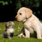 Bezpłatna sterylizacja lub kastracja psów ikotów