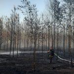 Kolejny pożar lasu. Nadal szukamy podpalacza