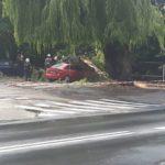 Spadający konar drzewa uszkodził auto